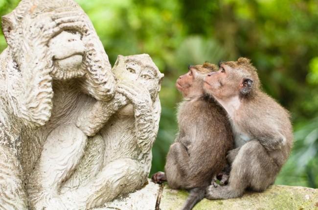 статую обязьян и 2 живые обезьянки куда-то испуганно уставились